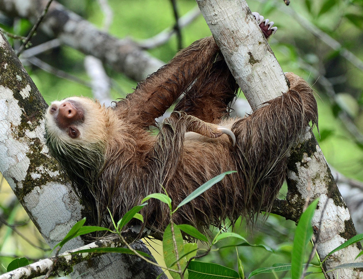 Image of a sloth at play